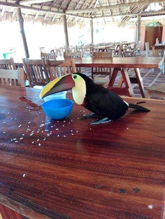 La Cruz, Costa Rica: Paco el tucán y la exc vista