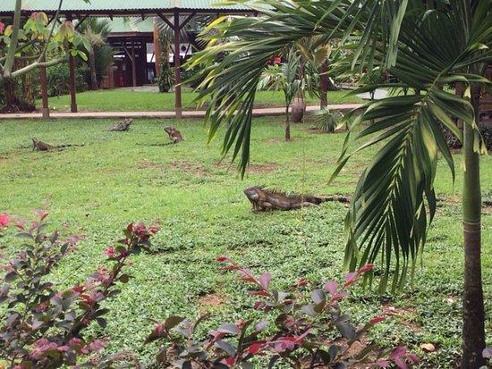 مومبا لودج تورتوغيرو: In der Mawamba Lodge herrscht Tiersicht-Garantie!