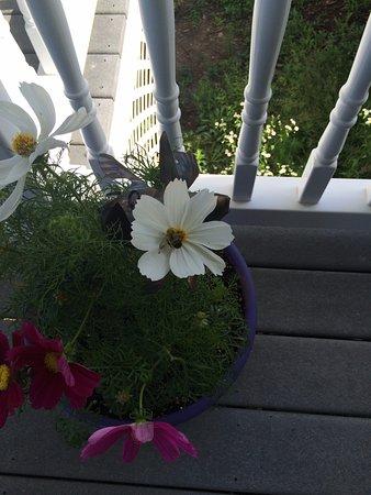 Pleasant Mount, PA: flower baskets on porch