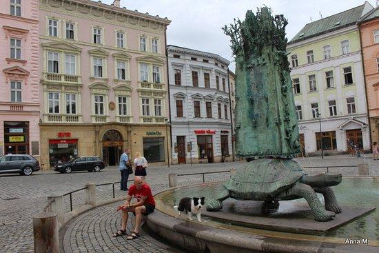 Olomouc, Tsjekkia: Żółw