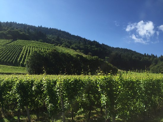 Neuweier, Almanya: It is in the winery. Scenery is excellent. Most of staffs were friendly. No air conditioner in t
