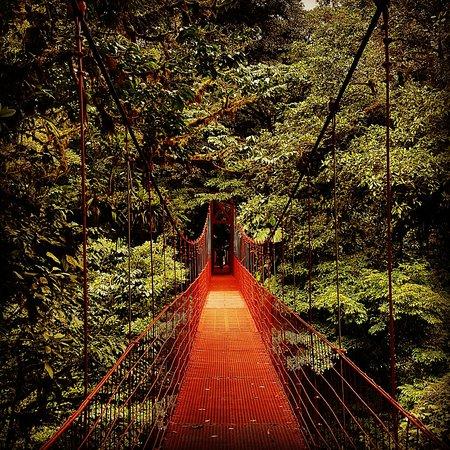 蒙特維多雲霧森林自然保護區照片