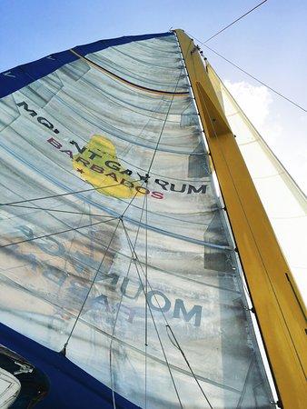 Barbados Sailing : Wasn't Me