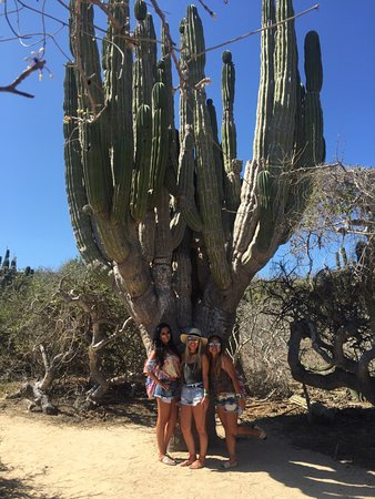 Cabo Adventures : Tour of the cacti