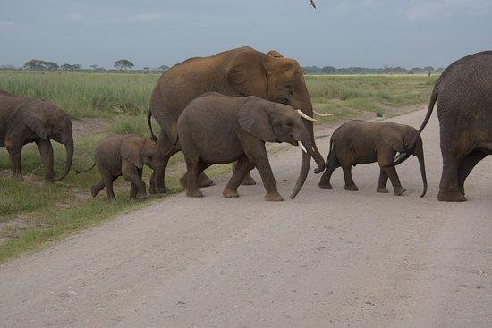 Amboseli National Park照片