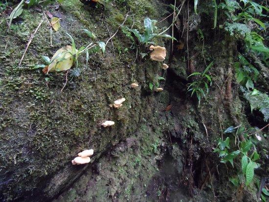 Monteverde Theme Park: Jungle pics