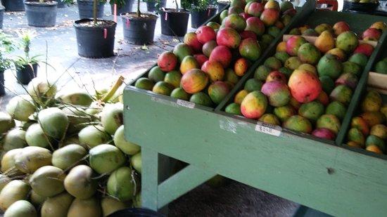 Fruitscape