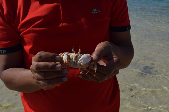 Wadi Gemal : crab caught by our guide Ahmed