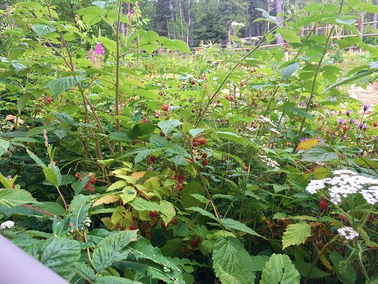 Palmer, AK: Rapsberries and Rosehips