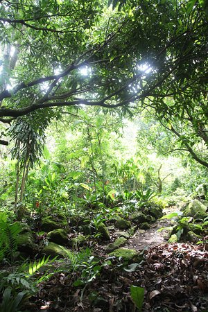 Coffee Tour El Cafetal: The farm looks more like forest