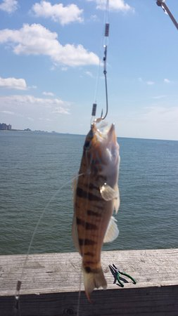 Second Avenue Pier Catch Of The Day