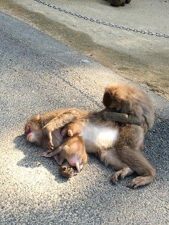 餌食べ中: fotografía de Takasakiyama Natural Zoo, Oita - TripAdvisor