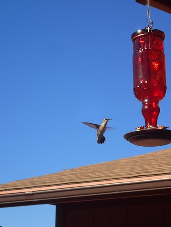 Mount Carmel, UT: Humming birds at breakfast!