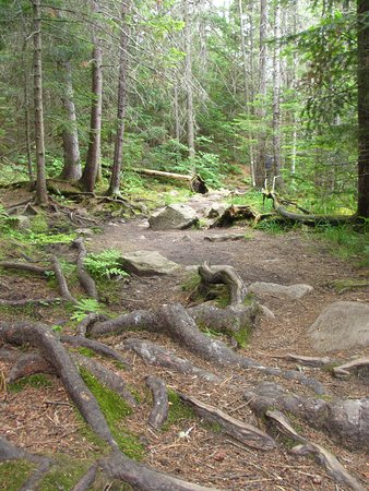 Парк Алгонкин, Канада: photo4.jpg