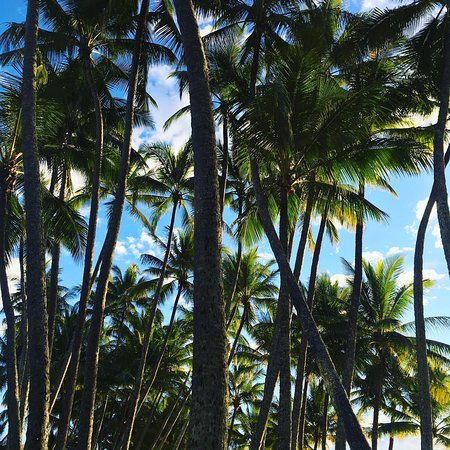 Palm Cove, Australien: photo2.jpg