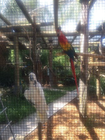 Kenansville, FL: Animals at Wild Florida Airboats & Wildlife Park