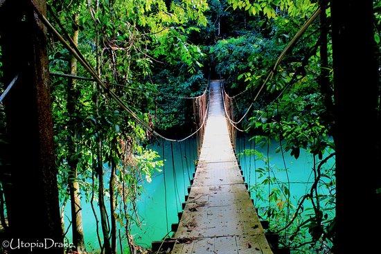 Drake Bay, كوستاريكا: Caminata Reugio Vida Silvestre Punta Río