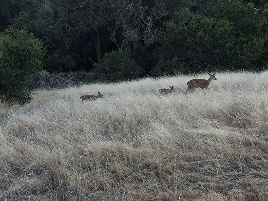 Cloverdale, CA: photo0.jpg