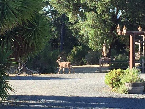 Cloverdale, Californië: photo1.jpg