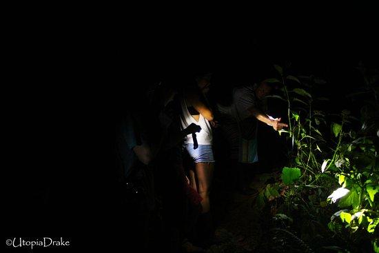 Drake Bay, Kosta Rika: Night Walk