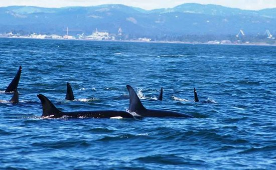 Sooke, Kanada: Whales!