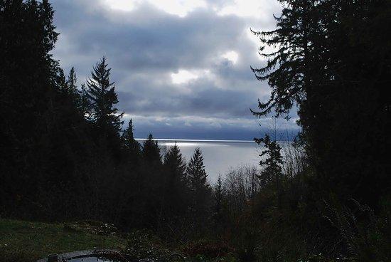 Sooke, แคนาดา: Hemlock Tree 1