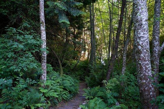 Sooke, Canadá: Path to Beach