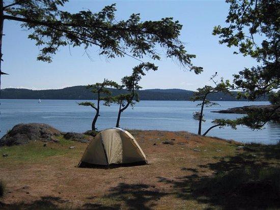 Friday Harbor, WA: camping tent