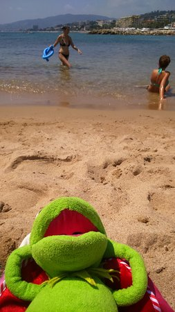 Midi Plage: Sunbathing Frog!