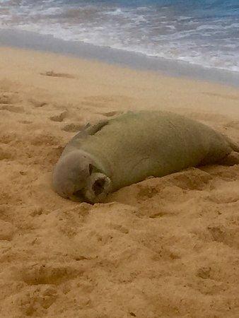 Poipu Beach Park: photo0.jpg