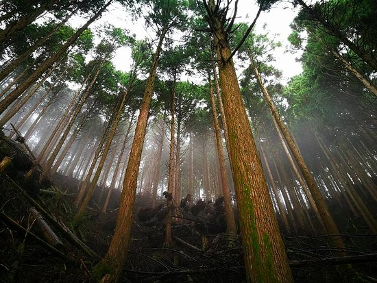Kinki, Japonia: deep woods