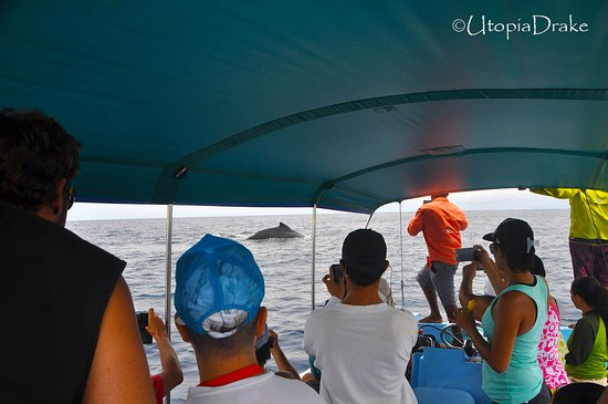 Drake Bay, Costa Rica: Whale whatching tour
