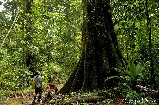 Drake Bay, Costa Rica: Wildlife Refuge Punta Rio