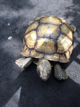 Granada, Nicaragua: Beautiful animal
