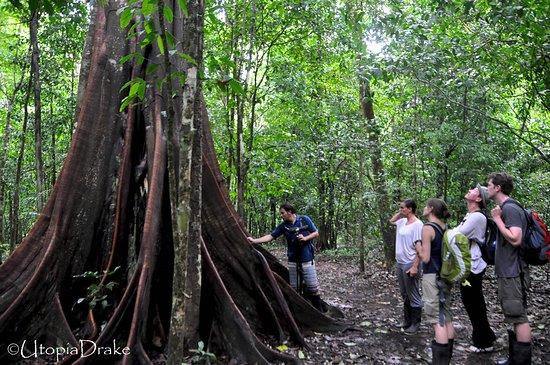Drake Bay, كوستاريكا: Steven guiding