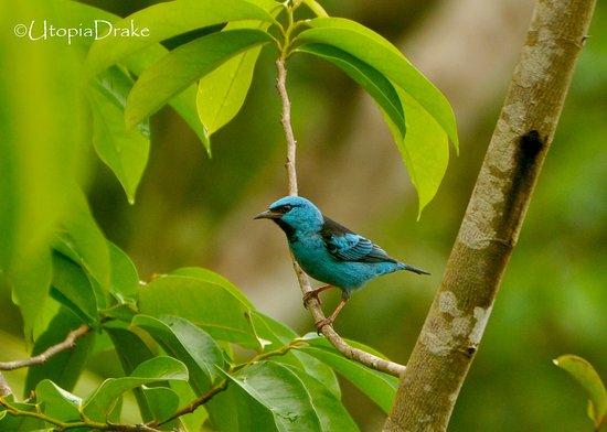 Drake Bay, คอสตาริกา: Bird whatching Tour