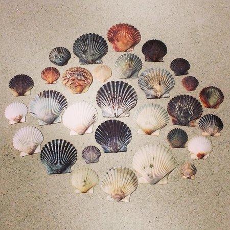 Beaufort, Carolina del Nord: Bird Shoal Beach Shells ❤️