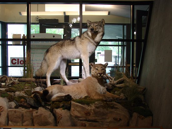Libby Dam Visitor Center: wildlife exhibit