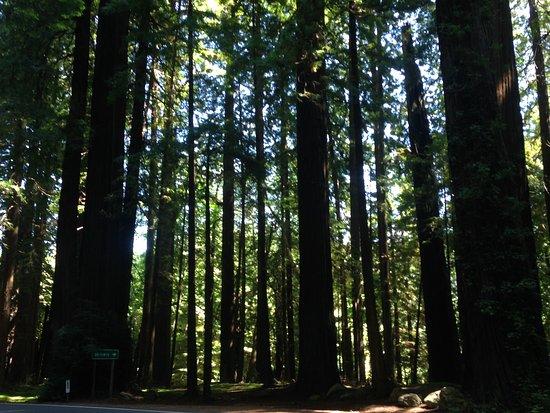 Klamath, CA: Redwoods