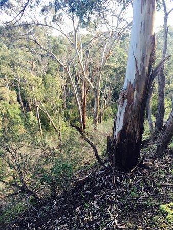 South Morang, Австралия: photo4.jpg