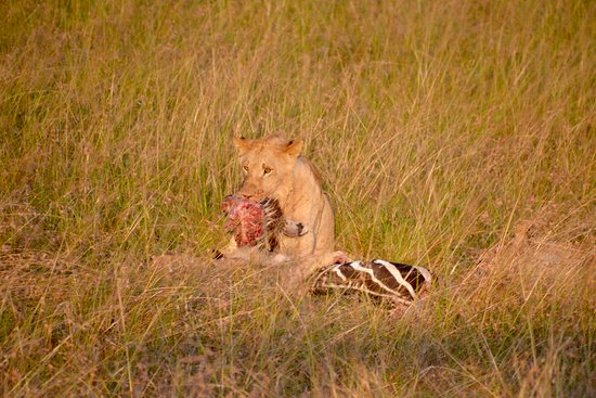 Mara Simba Lodge: Safari outside Simba Lodge
