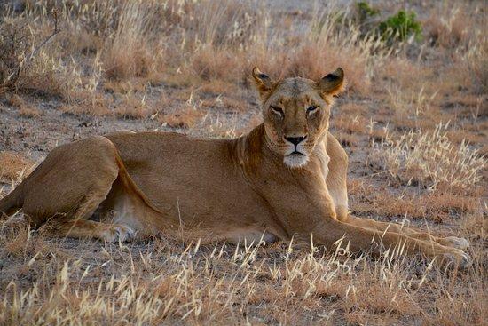 Bilde fra Buffalo Springs Game Reserve