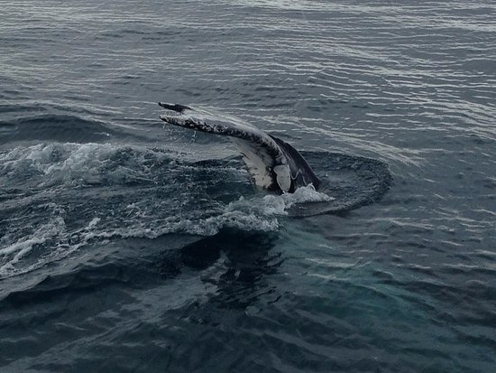 Херви-Бей, Австралия: Fin wave