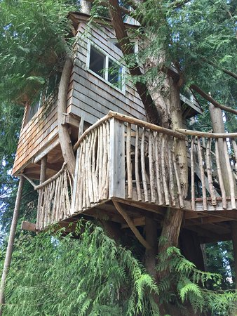 Really Cool Tree Houses really cool tree house! - picture of orcas island pottery