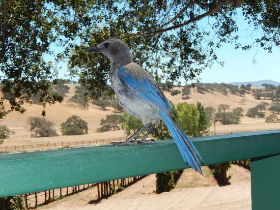 Solvang, CA: Unexpected visitor