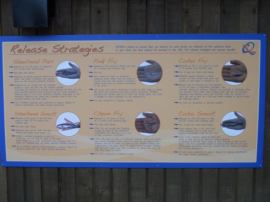 Quatse Salmon Stewardship Centre: Sign detailing release strategies for 4 species of salmon