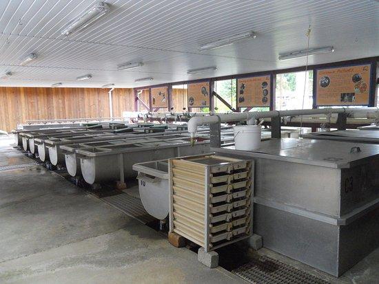 Quatse Salmon Stewardship Centre: Hatchery Tanks
