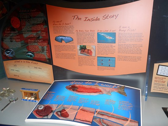 Port Hardy, Kanada: Learning displays, puzzles and quizzes