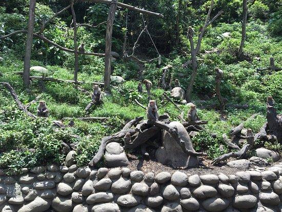 Uncle Guo Macaque Park
