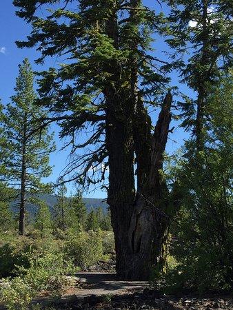 La Pine張圖片